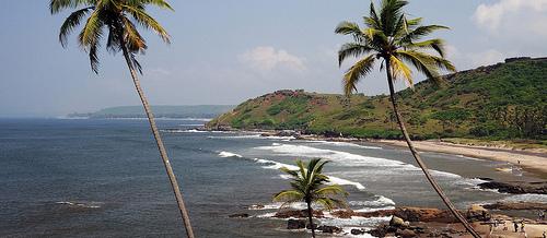 Chapora beach Palm trees, view chapora beach