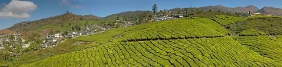 Munnar Panoramic