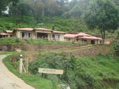 Munnar accommodation olive brook