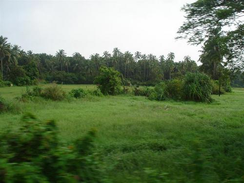 Goa rural scene, village