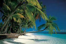 Tropicalo beach, Sun, India, palm trees