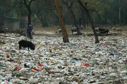 Litter problem in India, cow, pollution