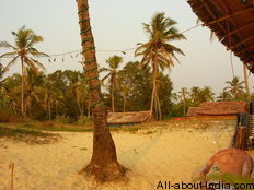 Colva beach, sandy palm tree, goa
