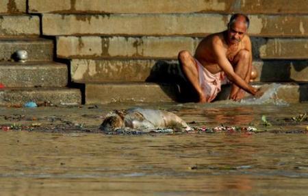 body floating in ganges, ganges pollution